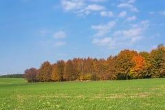 Ländliche Landschaft des Herbstes mit einem Wald stockfotos