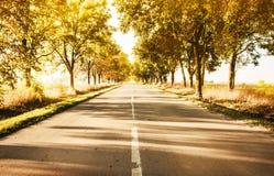 Ländliche Landschaft des Herbstes mit Landstraßen- und -goldbäumen entlang Lizenzfreie Stockbilder