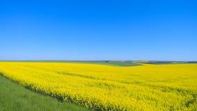 Ländliche Landschaft des panoramischen Sommers stockfoto