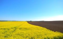 Ländliche Landschaft des Sommers lizenzfreies stockfoto