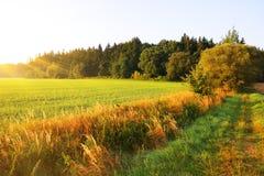 Ländliche Landschaft des Sommers bei Sonnenaufgang Stockbild
