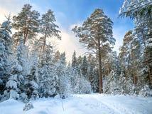 Ländliche Landschaft des Winters mit dem Wald und dem blauen Himmel Lizenzfreies Stockfoto