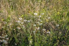 Ländliche Landschaft an einem sonnigen Tag im Sommer lizenzfreies stockbild
