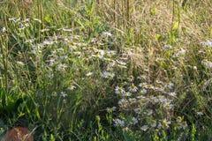 Ländliche Landschaft an einem sonnigen Tag im Sommer lizenzfreie stockfotografie