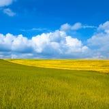Ländliche Landschaft. Gelbes und grünes Feld mit bewölktem blauem Himmel Stockbilder
