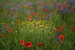 Ländliche Landschaft - Lavendel und rote Mohnblumen Lizenzfreies Stockbild