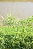 Ländliche Landschaft mit Abzugsgraben in Toskana-Landschaft Lizenzfreies Stockfoto