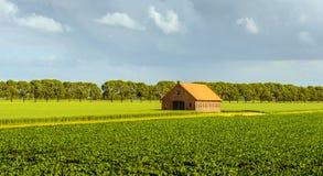Ländliche Landschaft mit Bearbeitung von Zuckerrüben und von Weizen und herein Stockbild