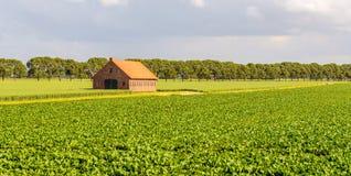 Ländliche Landschaft mit Bearbeitung von Zuckerrüben und von Weizen und herein Lizenzfreie Stockfotos
