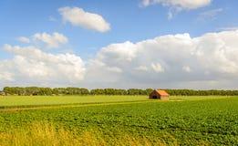 Ländliche Landschaft mit Bearbeitung von Zuckerrüben und von Weizen und herein Lizenzfreies Stockfoto