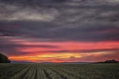 Ländliche Landschaft mit dem schönen Sonnenuntergang Lizenzfreie Stockbilder