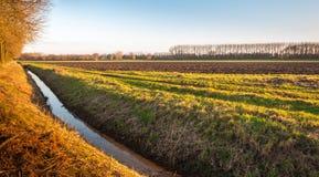 Ländliche Landschaft mit einem Abzugsgraben Lizenzfreies Stockbild