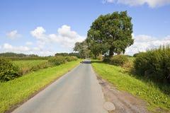 Ländliche Landschaft mit einem Baum zeichnete Landstraße in der Sommerzeit Lizenzfreies Stockfoto