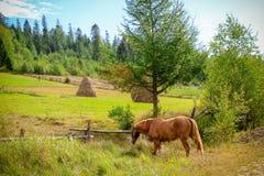 Ländliche Landschaft mit einem Pferd, Heuschobern und Wiese lizenzfreie stockfotos