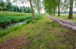 Ländliche Landschaft mit einem Weg zwischen hohen Bäumen Lizenzfreies Stockfoto