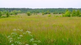 Ländliche Landschaft mit Feld Stockbilder