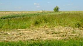 Ländliche Landschaft mit Feld Lizenzfreie Stockfotos
