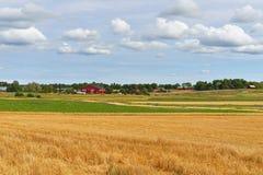 Ländliche Landschaft mit gemähtem Roggen Stockfotografie