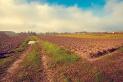 Ländliche Landschaft mit gepflogenen Feldern Lizenzfreies Stockbild
