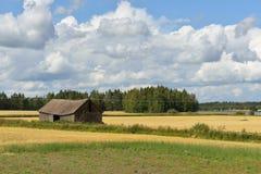 Ländliche Landschaft mit Goldfeld und -scheune Lizenzfreies Stockbild