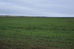 Ländliche Landschaft mit grünem Feld von Winterfrüchten am bewölkten Tag lizenzfreie stockfotografie