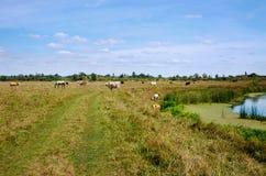 Ländliche Landschaft mit Kühen und Pferden Stockbilder