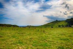 Ländliche Landschaft mit Kuhherde Stockbild