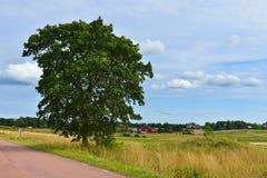 Ländliche Landschaft mit Landstraße zwischen Feldern Lizenzfreie Stockfotos