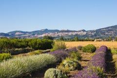 Ländliche Landschaft mit Lavendelfeld Lizenzfreies Stockfoto