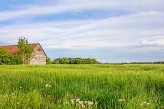 Ländliche Landschaft mit Maisfeld, -wiese und -scheune Stockbild