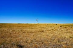 Ländliche Landschaft mit trockenem Gras und Schattenbild des toten Baums Stockbilder