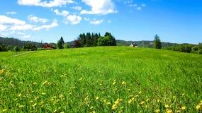 Ländliche Landschaft mit wilden gelben Blumen in der grünen Wiese lizenzfreie stockbilder