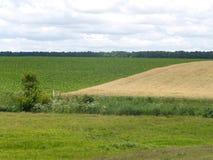 Ländliche Landschaft mit zwei Feldern Lizenzfreies Stockfoto