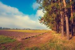 Ländliche Landschaft morgens Anbaufähiges Feld nahe dem Wald Stockbilder