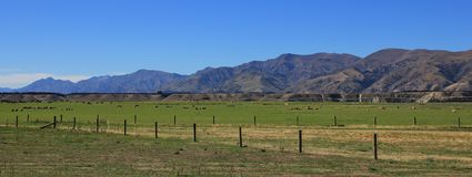 Ländliche Landschaft in Otago, Neuseeland Stockfotografie