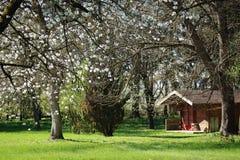 Ländliche Landschaft, parken im Frühjahr Lizenzfreie Stockfotografie