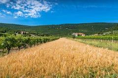 Ländliche Landschaft in Slowenien-Landschaft Stockbild