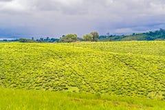 Ländliche Landschaft in Tansania Stockbild