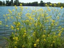 Ländliche Landschaft und Ackerland Lizenzfreie Stockfotos