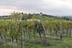 Ländliche Mittelmeerlandschaft mit Weinbergen und Dorf bei Sonnenuntergang, Slowenien Lizenzfreie Stockfotos