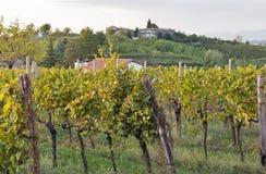 Ländliche Mittelmeerlandschaft mit Weinbergen und Dorf bei Sonnenuntergang, Slowenien Stockfotos
