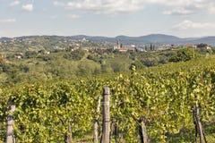 Ländliche Mittelmeerlandschaft mit Weinbergen und Medana-Dorf, Slowenien Stockfoto