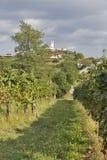 Ländliche Mittelmeerlandschaft mit Weinbergen und Smartno-Dorf, Slowenien Lizenzfreie Stockfotografie