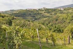 Ländliche Mittelmeerlandschaft mit Weinbergen und Smartno-Dorf, Slowenien Lizenzfreie Stockbilder