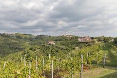 Ländliche Mittelmeerlandschaft mit Weinbergen und Smartno-Dorf, Slowenien Stockfoto