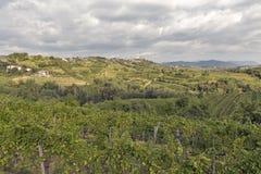 Ländliche Mittelmeerlandschaft mit Weinbergen und Smartno-Dorf, Slowenien Lizenzfreies Stockfoto