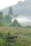 Ländliche Morgenatmosphäre im Norden von Thailand lizenzfreie stockbilder