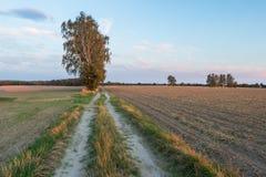 Ländliche sandige Straße des Landes Stockbild