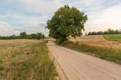Ländliche sandige Straßennahfelder des Landes Stockbild