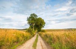Ländliche sandige Straßennahfelder des Landes Lizenzfreie Stockbilder